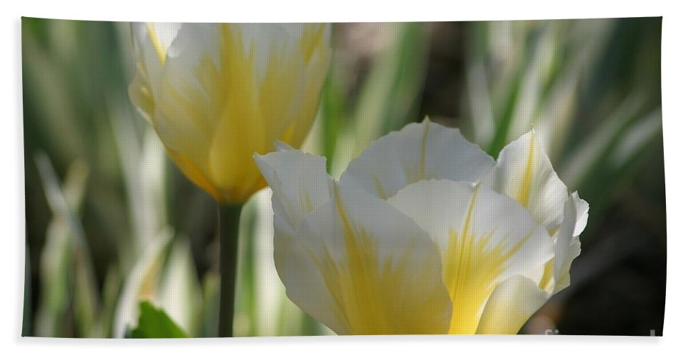 Tulips Bath Sheet featuring the photograph Magical Morning by Living Color Photography Lorraine Lynch
