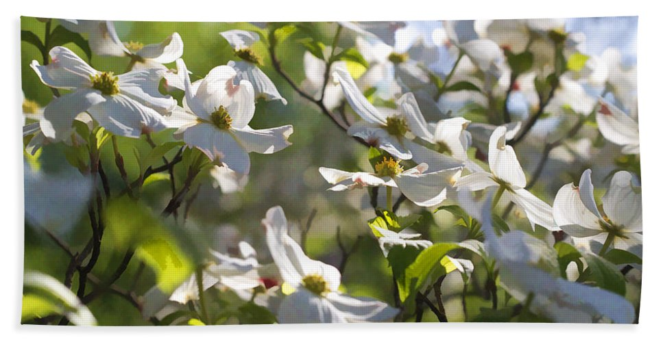 Cornus Florida Bath Sheet featuring the photograph Magical White Flowering Dogwood Blossoms by Kathy Clark
