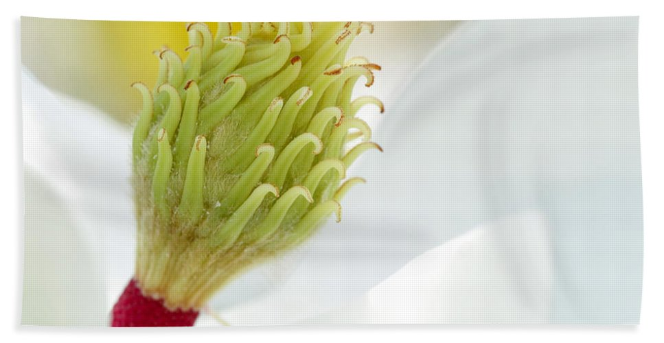Landscape Hand Towel featuring the photograph Magnificant Magnolia Macro by Sabrina L Ryan