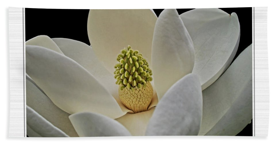 Bath Sheet featuring the photograph Magnolia I by Debbie Portwood