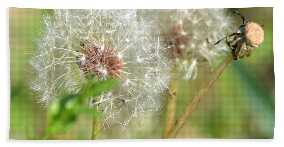 Wish Hand Towel featuring the photograph Make A Wish by Maria Urso