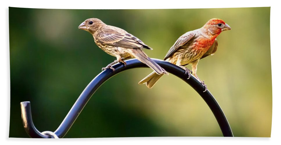 Female House Finch Bath Sheet featuring the photograph Male And Female House Finch by Linda Tiepelman