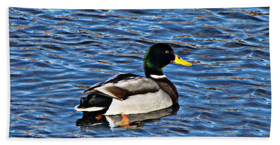 Duck Bath Sheet featuring the photograph Mallard Swimming by Ms Judi
