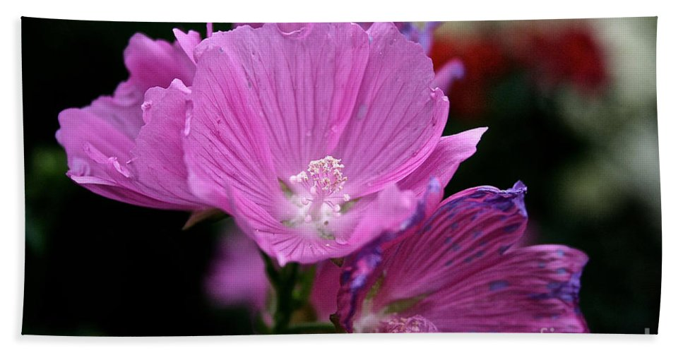 Floral Hand Towel featuring the photograph Mallow by Susan Herber
