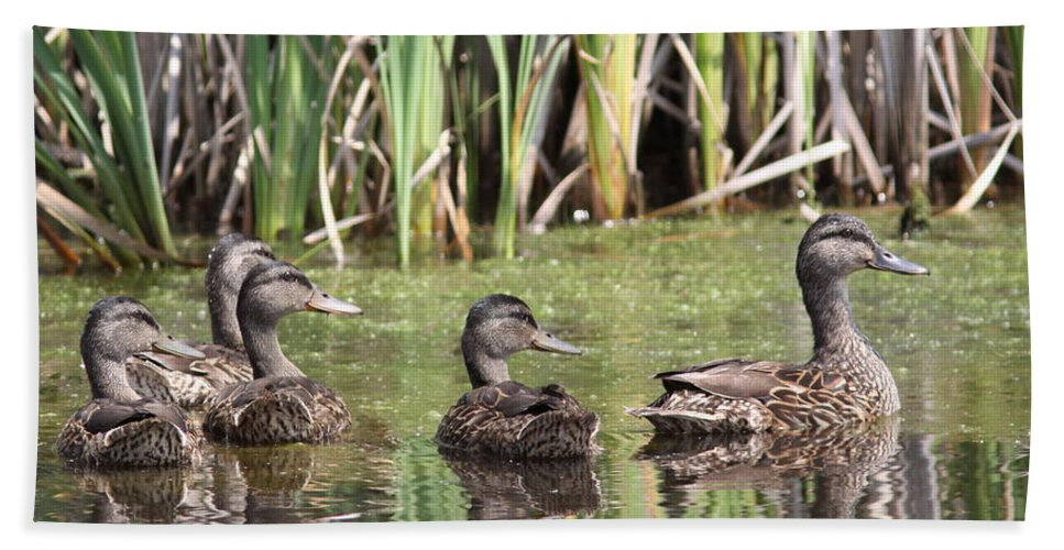Mallards Bath Sheet featuring the photograph Mama And Babies by Travis Truelove