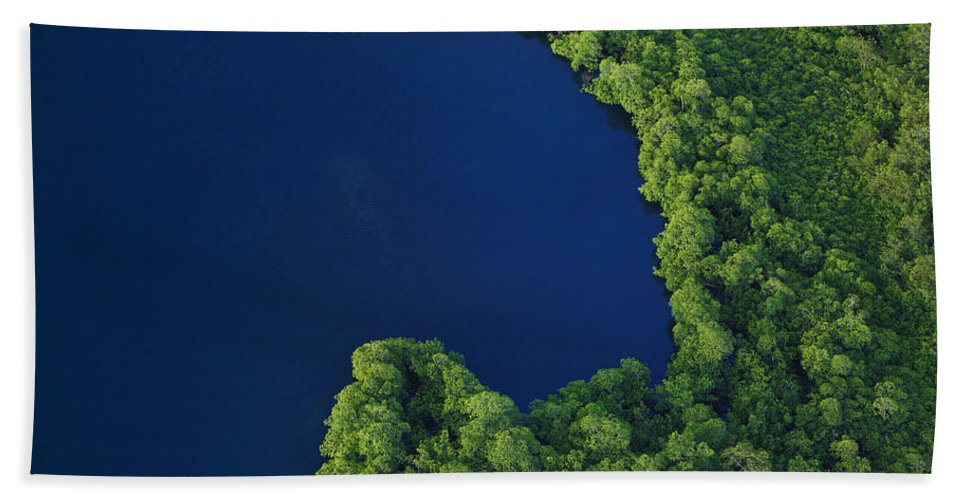Mp Hand Towel featuring the photograph Mangrove Rhizophoraceae Stand, Bocas by Christian Ziegler