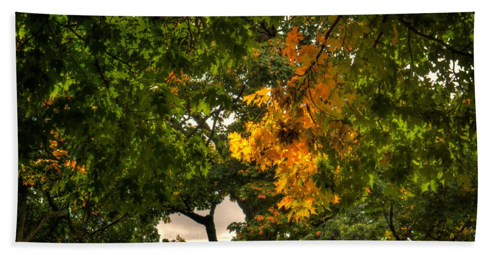 Xdop Hand Towel featuring the photograph Maple In Oak Grove by John Herzog