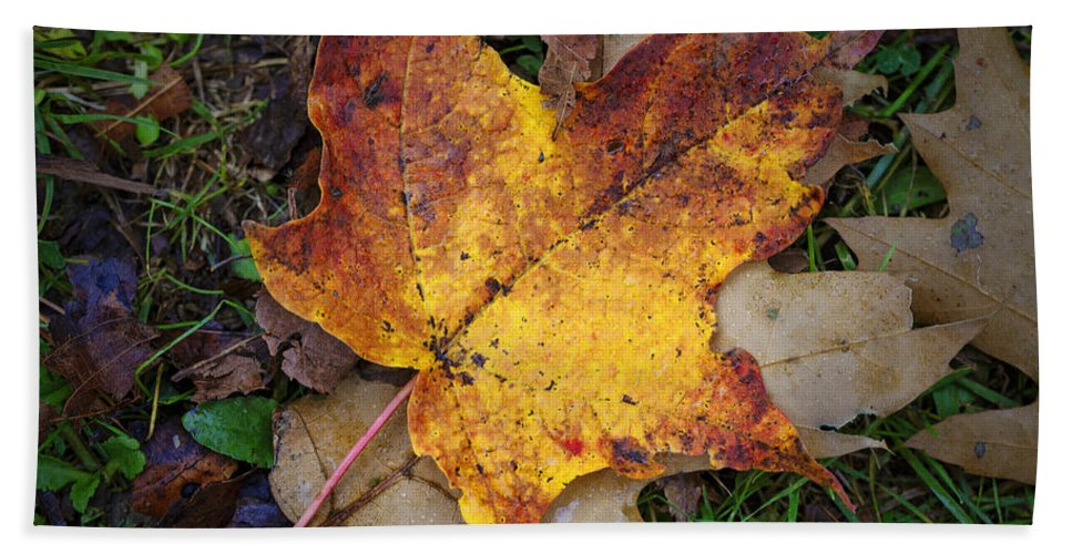 Maple Leaf Hand Towel featuring the photograph Maple Leaf In Fall by Rick Berk