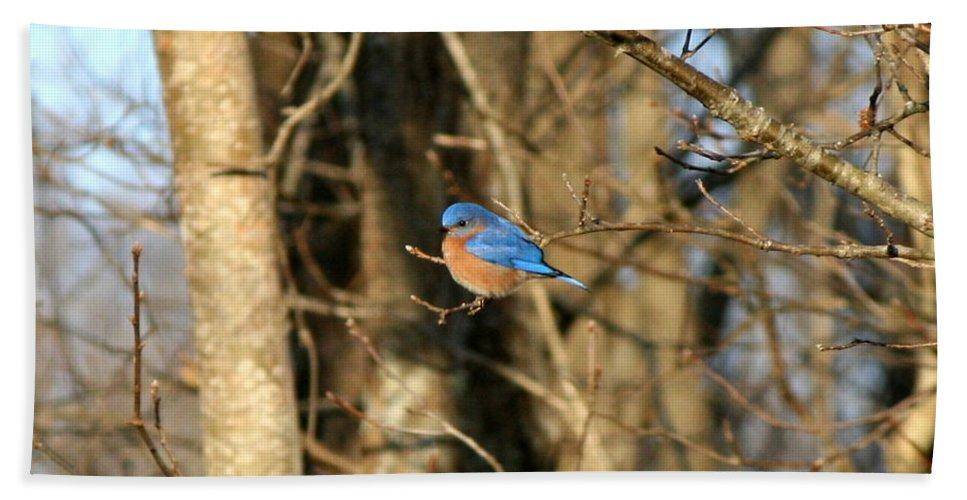 Bird Bath Sheet featuring the photograph March Bluebird by Neal Eslinger