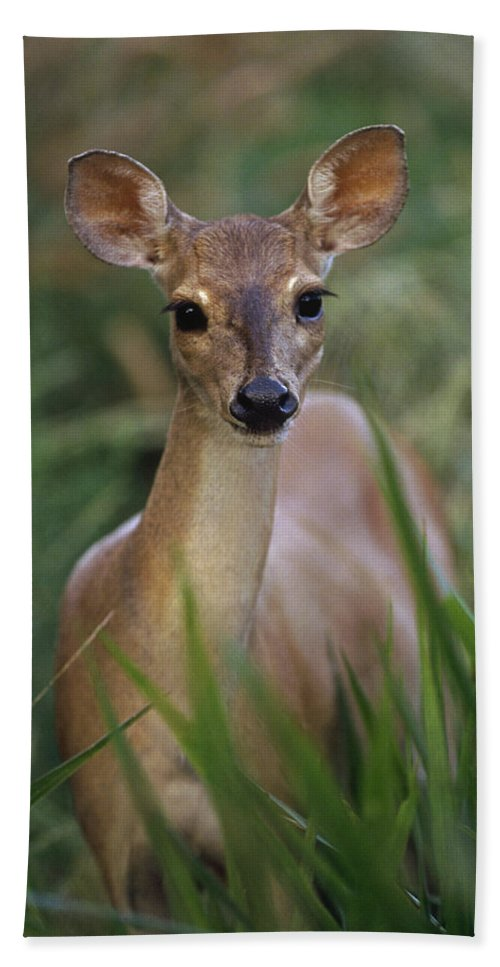 Mp Hand Towel featuring the photograph Marsh Deer Blastocerus Dichotomus by Claus Meyer