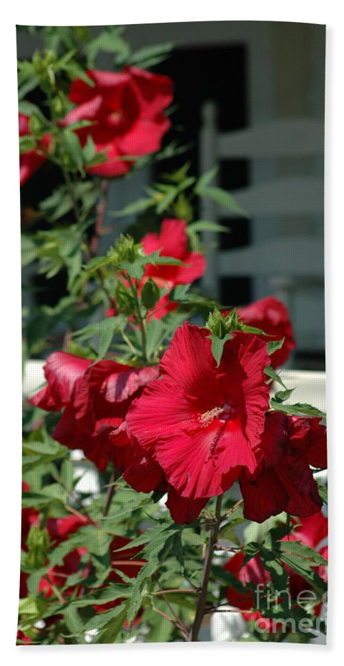 Martha's Vineyard Bath Sheet featuring the photograph Martha's Vineyard Red Hibiscus And Porch by Mike Nellums