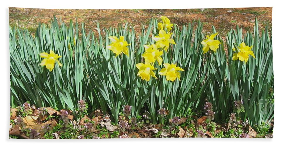 Daffodils Bath Sheet featuring the photograph Mary's Daffodils by Nancy Patterson