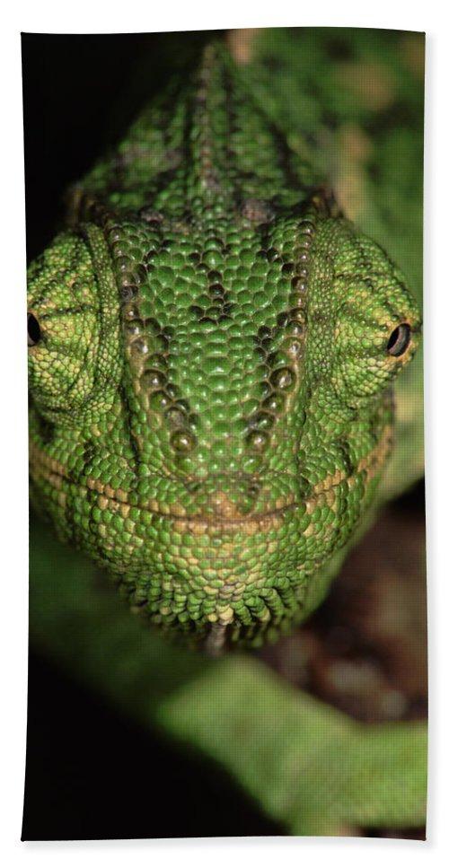 Npl Hand Towel featuring the photograph Mediterranean Chameleon Chamaeleo by Hans Christoph Kappel