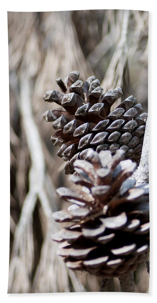 Up Bath Sheet featuring the photograph Dry Mediterranean Pinecone With Winter Colors by Pedro Cardona Llambias