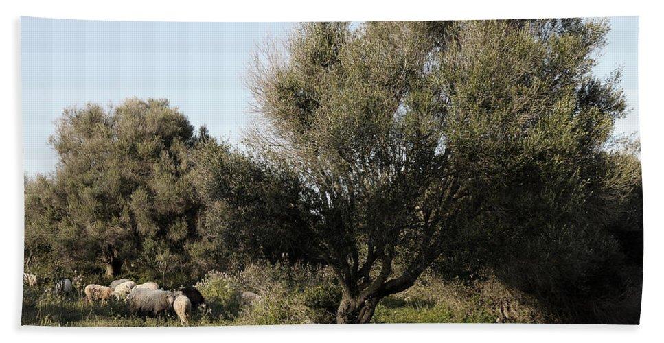 Nobody Bath Sheet featuring the photograph Mediterranean Wood Wiew by Pedro Cardona Llambias