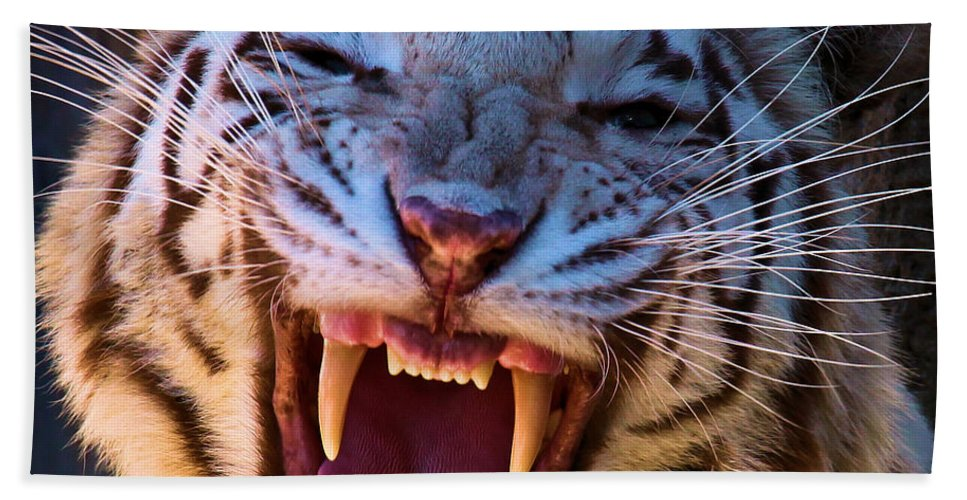 Bengal Tiger Bath Sheet featuring the photograph Meow by Adam Jewell