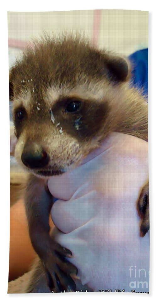 Raccoon Hand Towel featuring the photograph Messy Face by Art Dingo