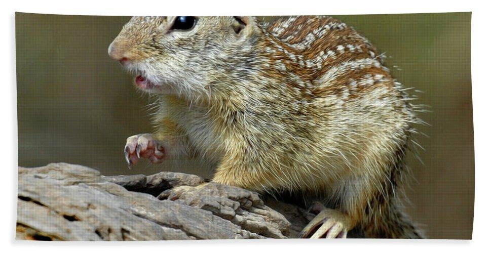 Mexican Ground Squirrel Bath Sheet featuring the photograph Mexican Ground Squirrel by Dave Mills