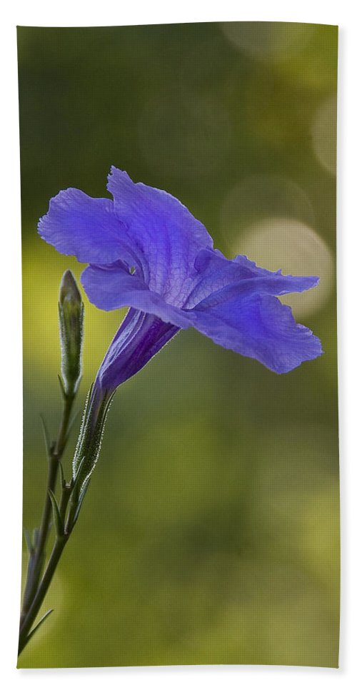 Mexican Petunia Hand Towel featuring the photograph Mexican Petunia by Steven Richardson