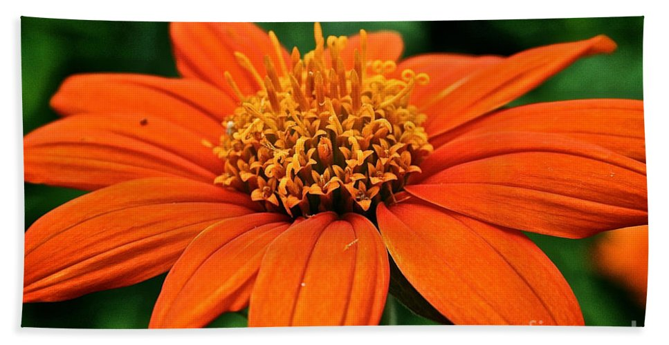 Floral Bath Sheet featuring the photograph Mexican Sunflower by Susan Herber