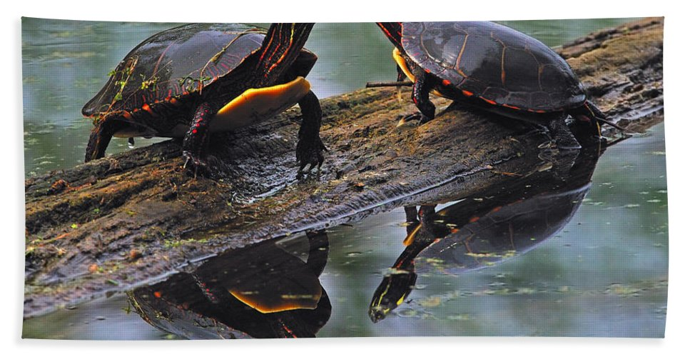 Midland Painted Turtle Hand Towel featuring the photograph Midland Painted Turtles by Tony Beck