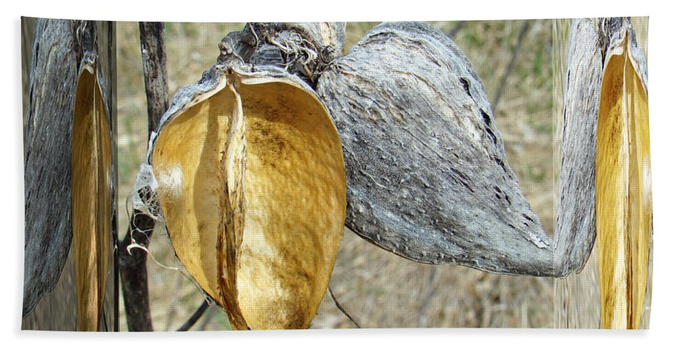 Milkweed Hand Towel featuring the photograph Milkweed Pods - Mirror Box by Mother Nature
