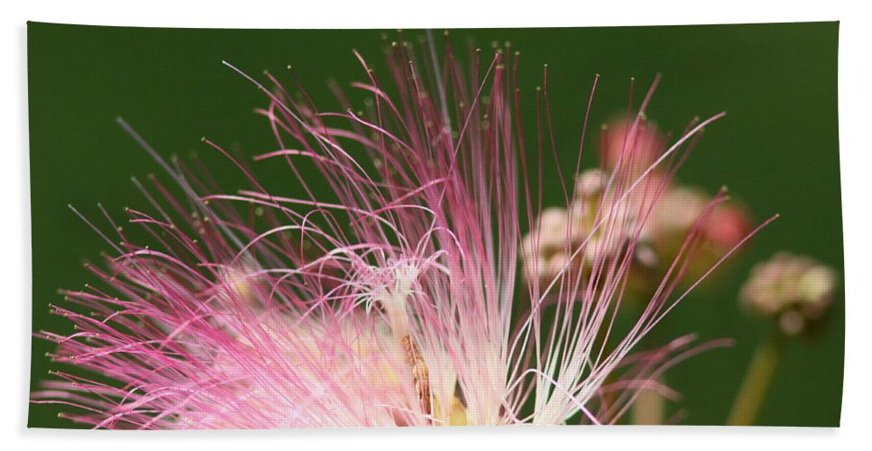 Bath Sheet featuring the photograph Mimosa And Worm by Travis Truelove