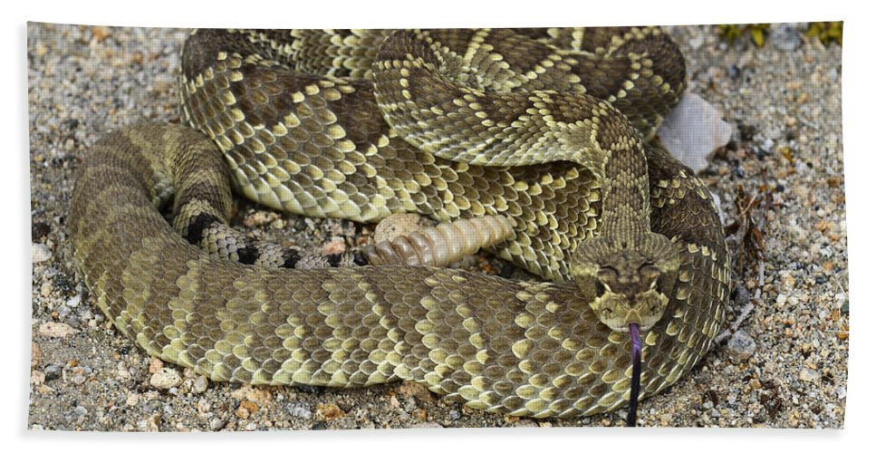 Mojave Bath Sheet featuring the photograph Mohave Diamondback Rattlesnake Coiled by Bob Christopher