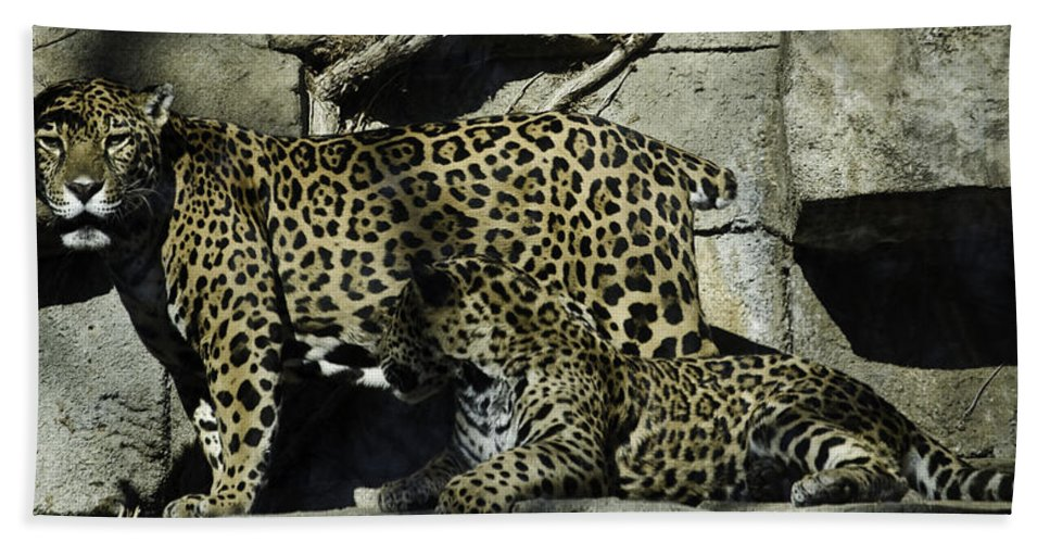Cat Bath Sheet featuring the photograph Mom And Baby Cheetah by Trish Tritz