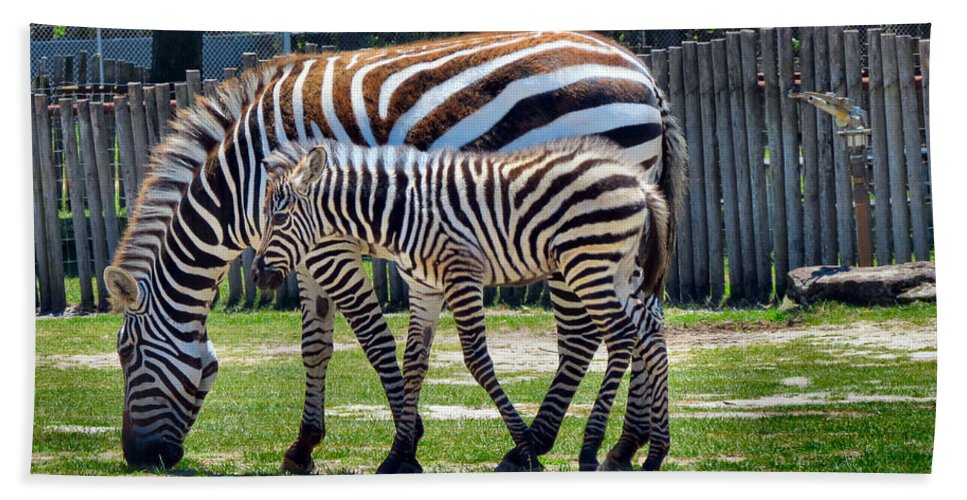 Black Bath Sheet featuring the photograph Mom N Baby Stripes by Art Dingo