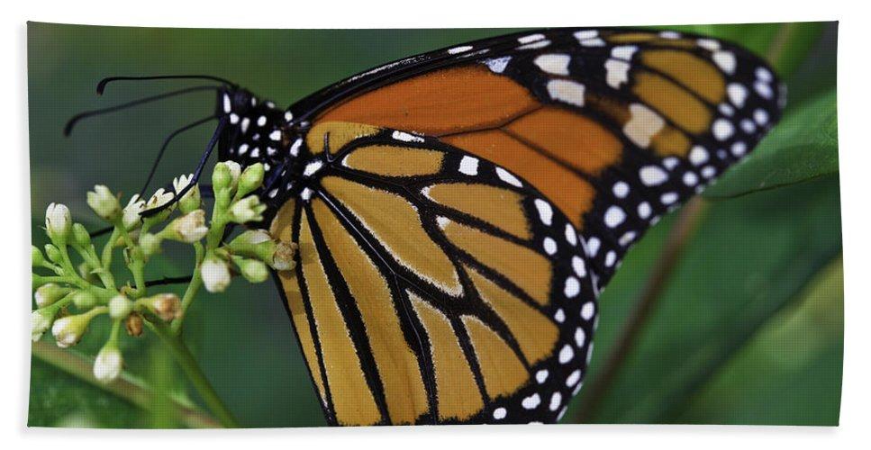Butterflies Hand Towel featuring the photograph Monarch by Perla Copernik