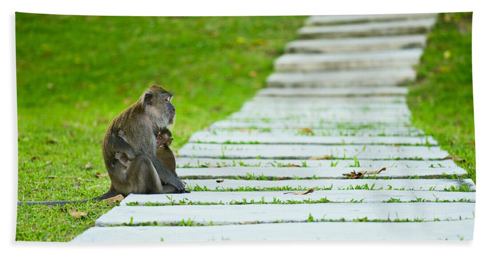 Animal Bath Sheet featuring the photograph Monkey Mother With Baby Resting On A Walkway by U Schade