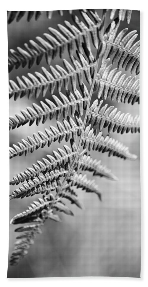 Fern Frond Bath Sheet featuring the photograph Monochrome Fern Frond by Steve Purnell