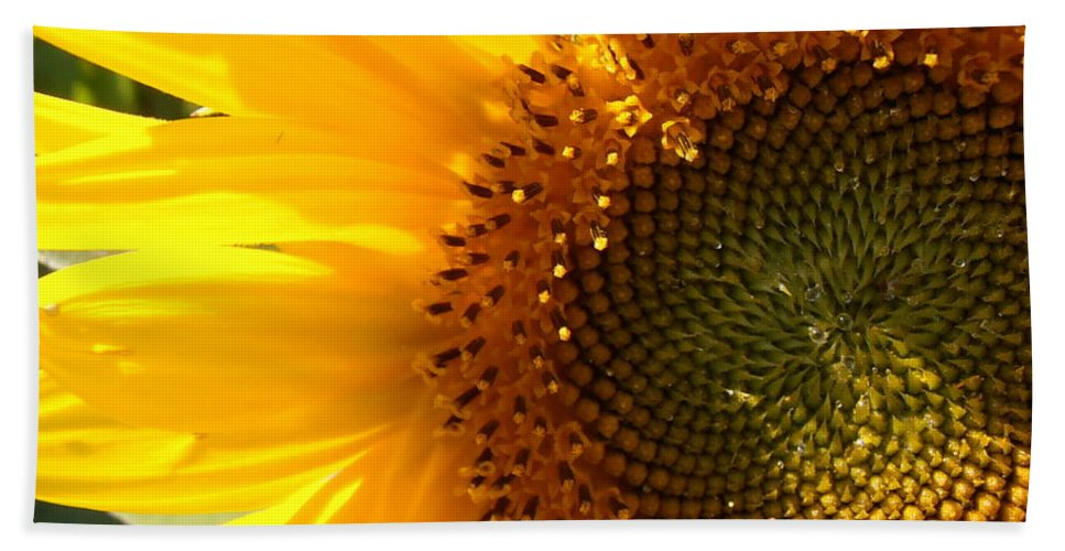 Sunflower Bath Sheet featuring the photograph Morning Dew On Sunflower by Kimberly Perry