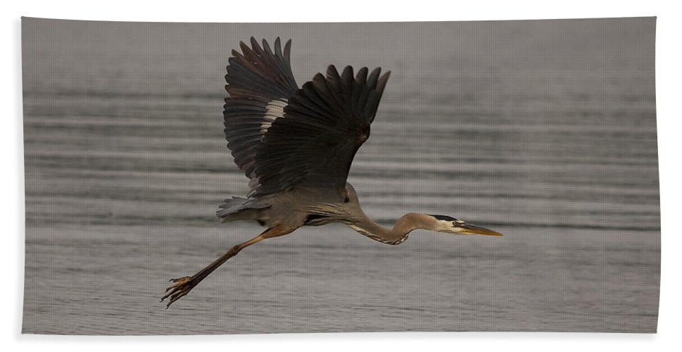 Heron Bath Sheet featuring the photograph Morning Flight by Eunice Gibb