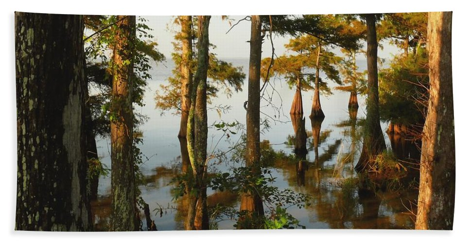 Swamps Hand Towel featuring the photograph Morning In The Swamps by Robert Brown