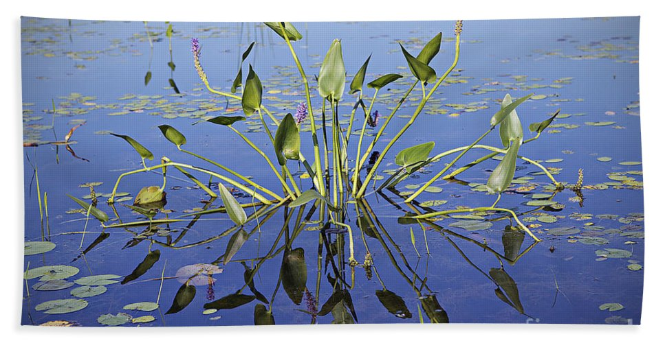 Lily Bath Sheet featuring the photograph Morning Reflection by Eunice Gibb