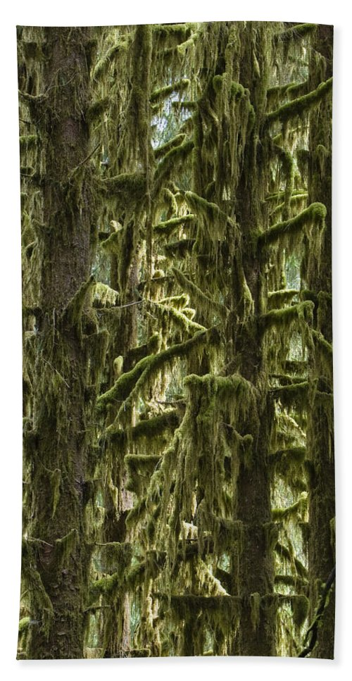 Mp Hand Towel featuring the photograph Moss Covered Trees, Hoh Rainforest by Konrad Wothe