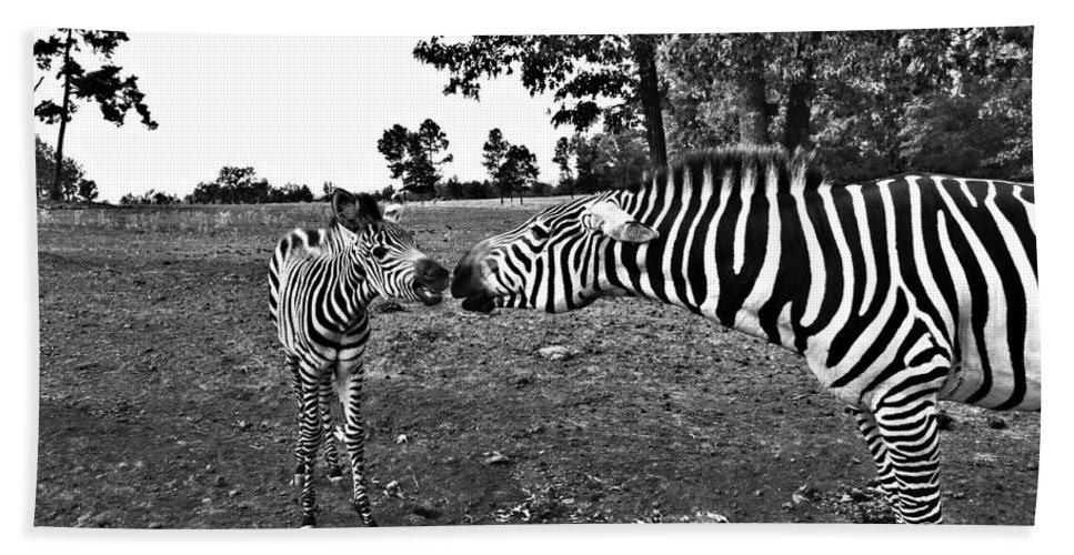 Zebras Hand Towel featuring the photograph Mother And Child-black And White by Douglas Barnard