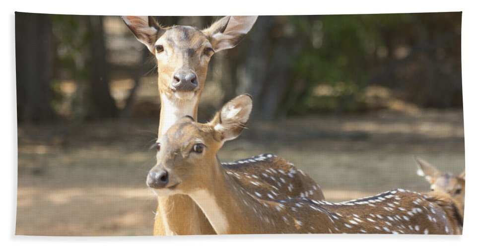 Deer Hand Towel featuring the photograph Mother And Child V3 by Douglas Barnard