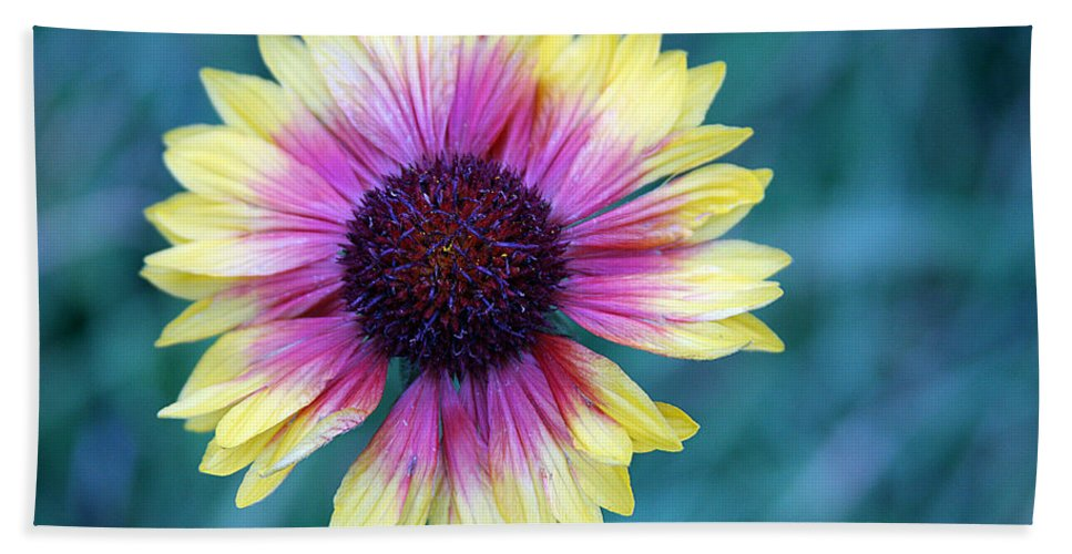 Yellow And Purple Daisy Hand Towel featuring the photograph Mountain Daisy by Kimberlee Fiedler