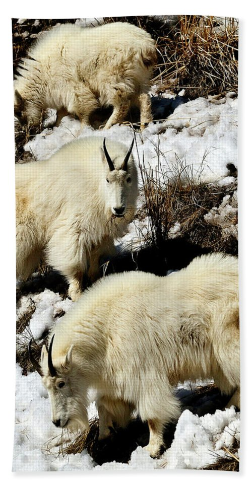 Mountain Goat Bath Sheet featuring the photograph Mountain Goat Trio by Greg Norrell