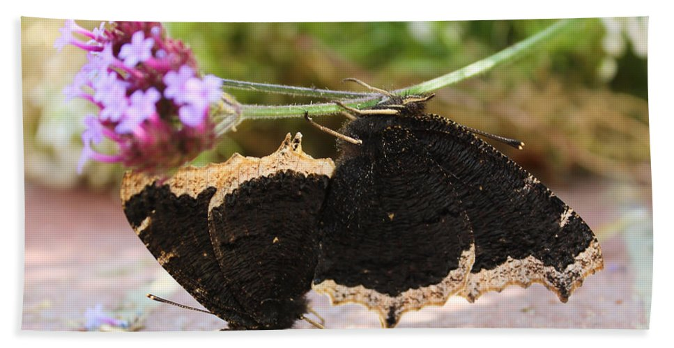 Mourning Cloak Hand Towel featuring the photograph Mourning Cloak Butterfly Lovin' by Heidi Smith
