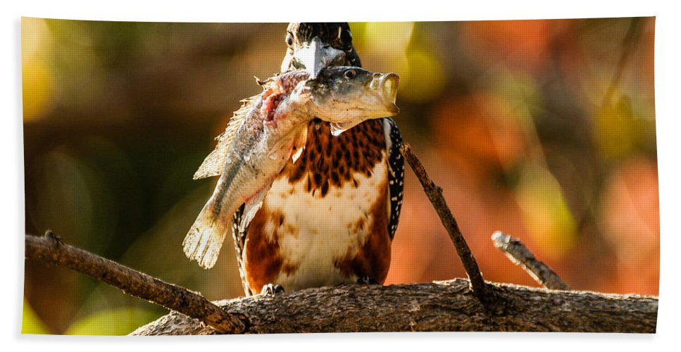 Action Hand Towel featuring the photograph Mouthful by Alistair Lyne