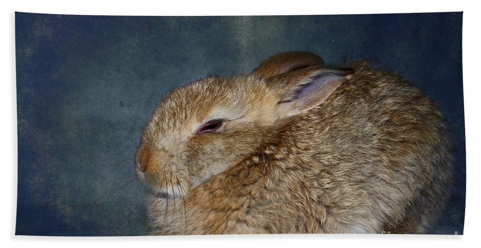 Rabbit Bath Sheet featuring the photograph Mr Canelle by Aimelle