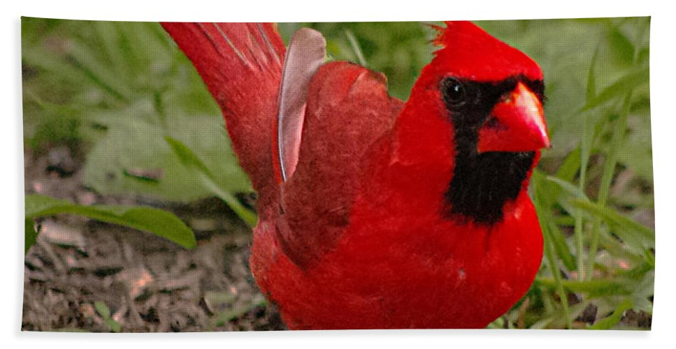 Young Male Cardinals Have The Most Brilliant Colors In The Spring. Hand Towel featuring the photograph Mr. Obvious by Jenny Gandert