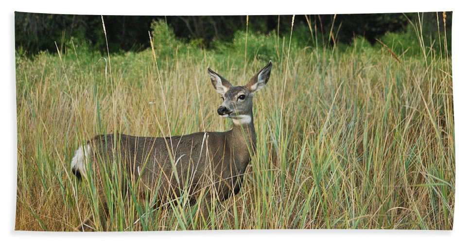Mule Deer Bath Sheet featuring the photograph Mule Deer Winthrop Wa 9176 by Michael Peychich