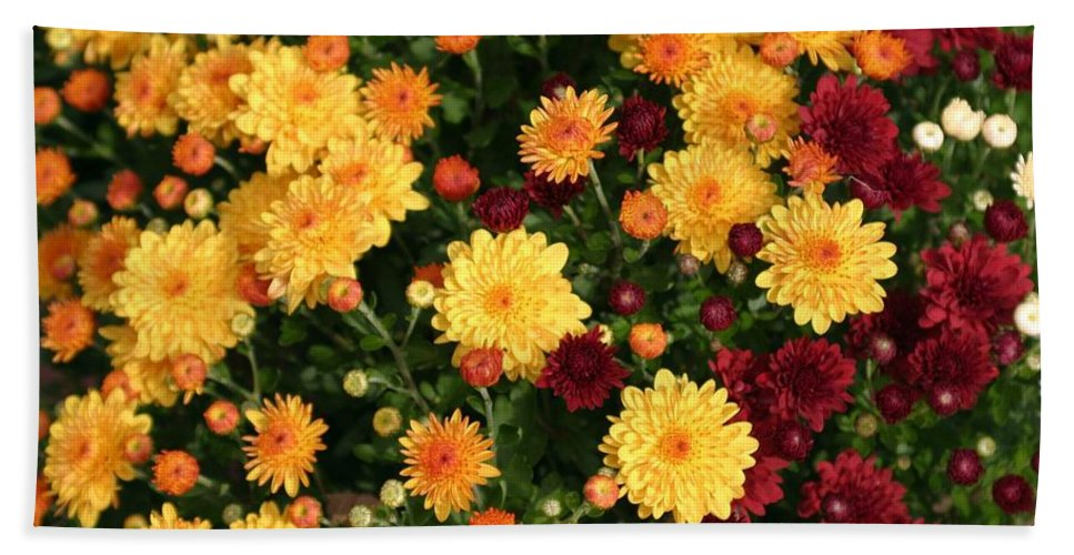 Flowers Hand Towel featuring the photograph Multi Colored Mums by Living Color Photography Lorraine Lynch
