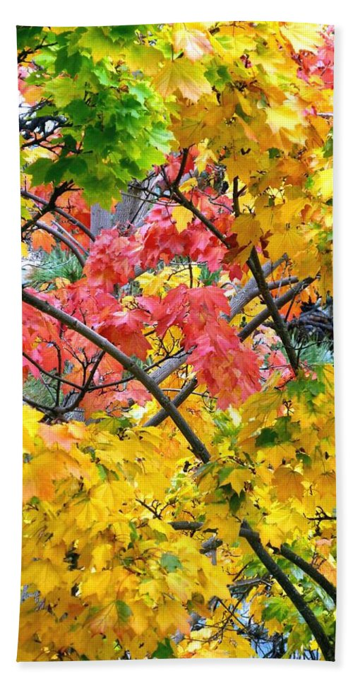 Multicolored Maple Hand Towel featuring the photograph Multicolored Maple by Will Borden