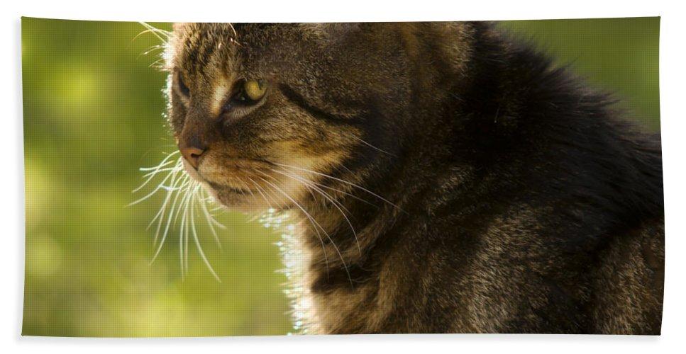 Cat Bath Sheet featuring the photograph My Cat by Angel Ciesniarska